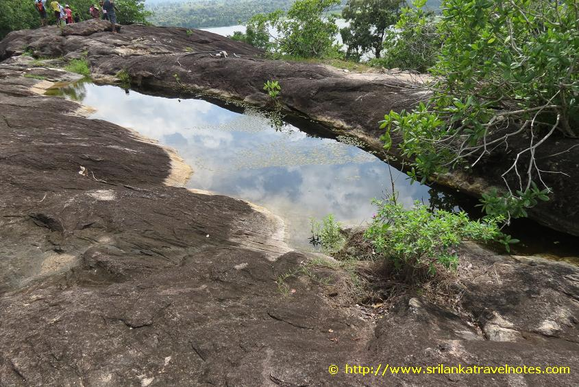 A Natural Pond