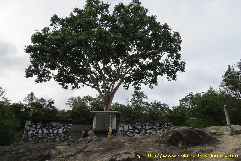 Boo Tree at the entrance of the Kudumbigala Monanstry